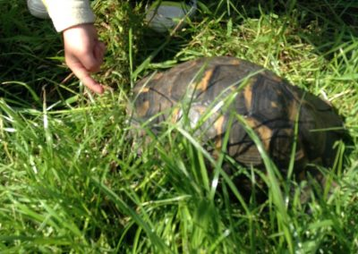 abc tortoise photo
